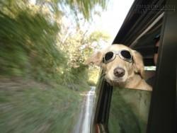 10 Kinh nghiệm du lịch cùng thú cưng