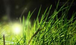 Trượt đại học và câu chuyện cỏ nhỏ đứng nhầm chỗ khiến bạn phải suy ngẫm