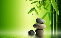 3 Bài Học Từ Cây Tre - Ngẫm Cách Sống Ở Đời