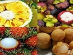 Mẹo hay nhận biết ngay hoa quả chín cây hay chín thuốc