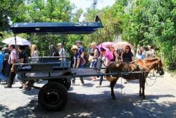 Du lịch Nha Trang trải nghiệm khám phá ngoại ô bằng xe ngựa