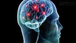 Bí quyết ăn uống để giữ cho não bộ trẻ lâu