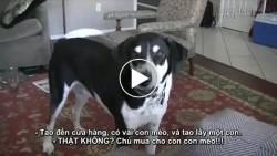 Cộng đồng mạng bấn loạn trước chú chó năn nỉ chủ ... nuôi mèo