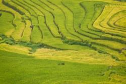 Du lịch Lào Cai ngắm Ngải Thầu mùa lúa chín