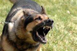 Bí kíp thần thánh để tránh bị chó dữ cắn