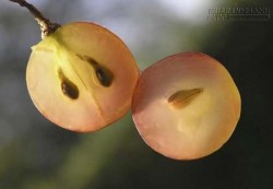 Điều gì sẽ xảy ra khi bạn ăn nho mà không bỏ hạt?
