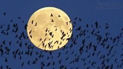 Ngắm siêu trăng tuyệt đẹp trên khắp thế giới trong đêm Trung thu