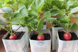 10 Cây cảnh bạn phải trồng ở trong nhà để tiền vô như nước