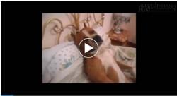 Cười vỡ bụng chú chó... ngủ nướng