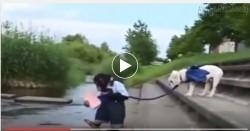 Cười sặc sụa với clip khỉ bắt chó vượt sông