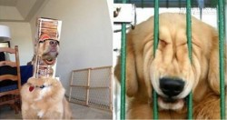 Chết cười với những chú cún thích tự làm khó mình