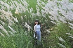 Đến thăm những cánh đồng lau đẹp nhất Việt Nam