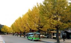 Du lịch Hàn Quốc ngắm bức tranh thu rực rỡ