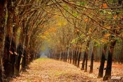 Những mùa thu vàng ở Việt Nam đẹp không kém Hàn Quốc