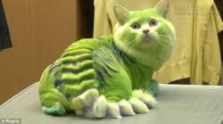Vì sao không có loài thú nào màu xanh lá cây?