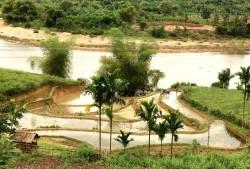 Vẻ đẹp ruộng vùng cao ở Quảng Ngãi