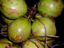 Uống nước dừa không đúng cách hại sức khỏe