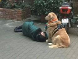 Hành động không ngờ tới của hai chú chó khi thấy chủ đột quỵ ngay trên đường