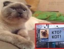 Lạ kỳ người dân đổ xô đi bầu một chú mèo làm… Thị trưởng thành phố