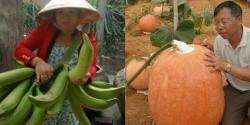 Giật nảy mình với những trái cây khổng lồ chỉ có ở Việt Nam