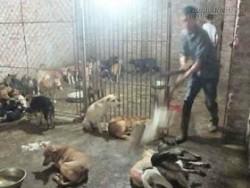 Rùng mình với chuyện sinh nghề tử nghiệp của những người hành nghề giết động vật