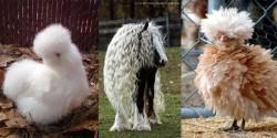 Mắt tròn mắt dẹt với những bộ lông độc nhất vô nhị của động vật