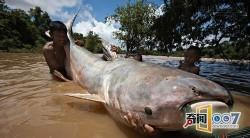 99% người không tin những con quái vật khổng lồ này là có thật