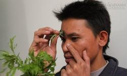 Mẹo hơ ngải cứu vào trán trị dứt điểm chứng nghẹt mũi, viêm xoang