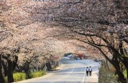 Hadong – điểm đến mới cho du khách Việt Nam khi thăm Hàn Quốc