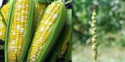 Tổ tiên của các loại rau quả thông dụng ngày nay trông như thế nào?