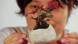 Lạ mắt với mẫu cây bonsai bay lơ lửng trên không trung