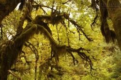 Độc đáo con đường rêu ba chiều ẩn khuất trong rừng sâu tại Mỹ