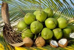 Nước dừa – vị thuốc cho sức khỏe