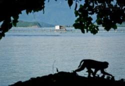 Vương quốc khỉ giữa lòng phố biển Nha Trang