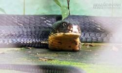 Khám phá bảo tàng rắn lớn nhất Đông Nam Á ở Tiền Giang