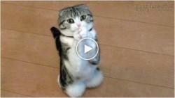 Cách xin xỏ của cún và mèo khiến bạn không thể không cho