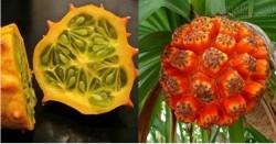 Há hốc mồm với những loại trái cây kỳ lạ nhất thế giới - Việt Nam hốt trọn một nửa