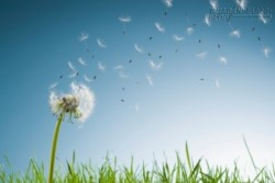 Học được tha thứ là phúc khí lớn nhất của đời người !