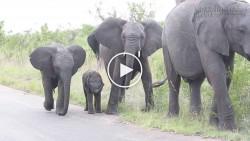 Buồn cười với chú voi con hoảng hốt khi phát hiện mình có... vòi