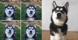 Chết cười với phản ứng của chú chó khi biết mình bị chủ lừa