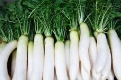 Phòng ngừa ung thư bằng… củ cải