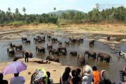 Ghé thăm trại trẻ mồ côi lớn nhất thế giới chỉ dành riêng cho loài voi