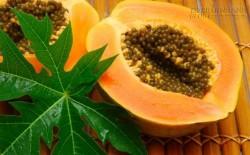 Bài thuốc chữa ung thư vú từ cây đu đủ