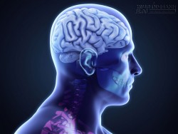 5 siêu thực phẩm ngăn ngừa chứng rối loạn não