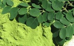 Phá hủy hơn 90% tế bào ung thư trong vòng 48h với loại rau có rất nhiều ở Việt Nam: Chuyên gia nói gì?