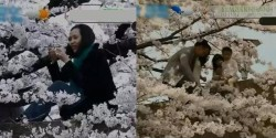 Nhật Bản đòi lập khu vực riêng cho những du khách phá hoại