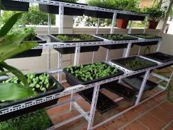 Mẹo hay chỉ với 1 triệu đồng để có cả vườn rau sạch tại nhà