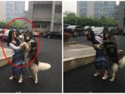 Không nhặt được mồm với chú chó Husky sàm sỡ người đi đường