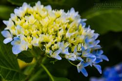 Những loài hoa lạ trên đỉnh Bà Nà
