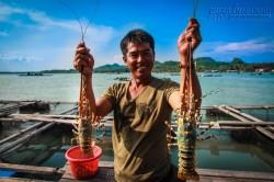 5 hòn đảo ở Việt Nam lý tưởng để thưởng thức tôm hùm ngon-bổ-rẻ